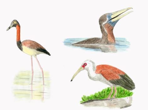Messel waterbirds