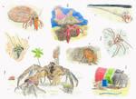 Hermit crab diversity