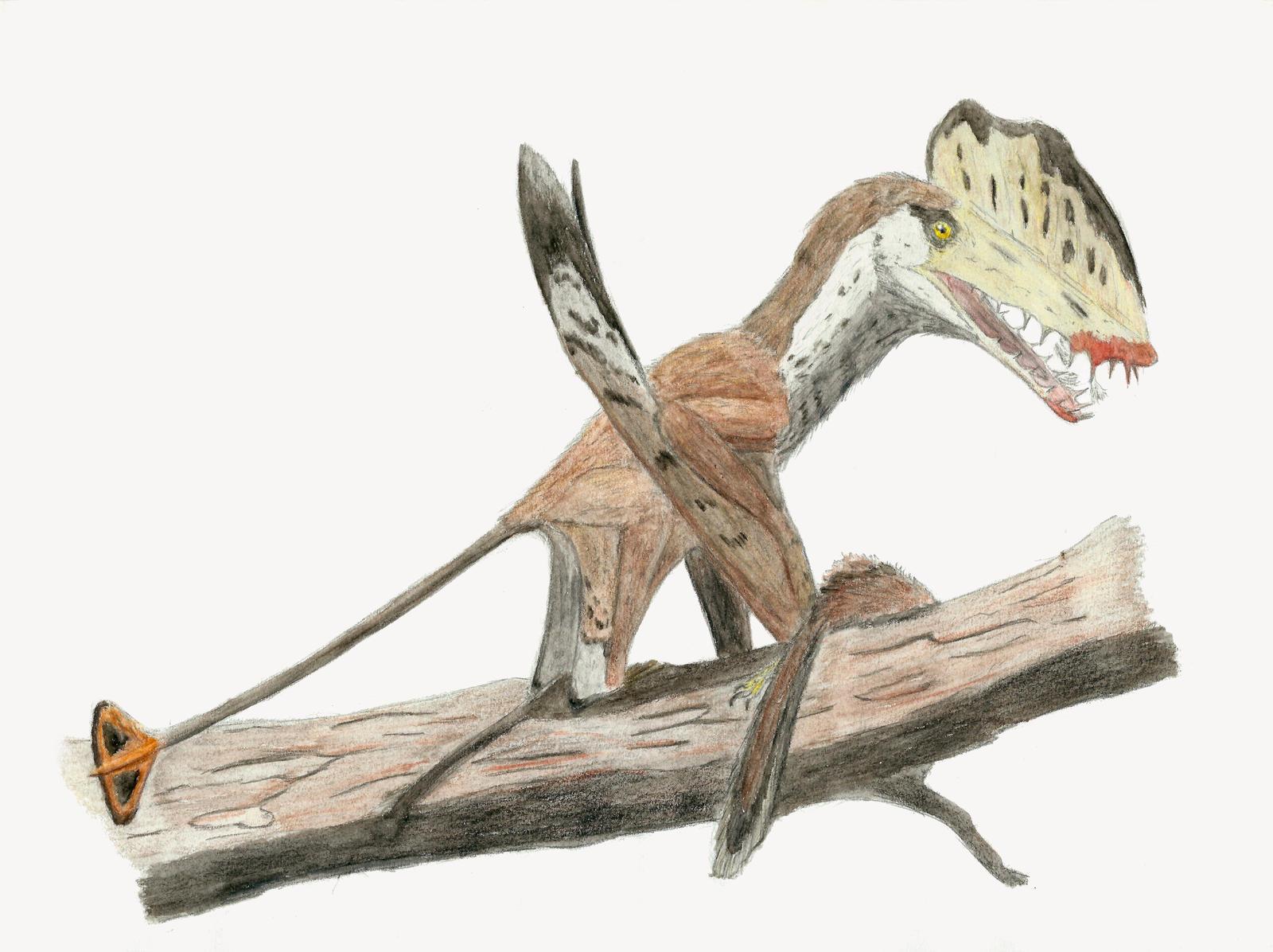 Harpactognathus gentryii