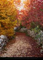 Autumn Forest Path by Esmeralda-stock