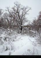 Winter Landscape by Esmeralda-stock
