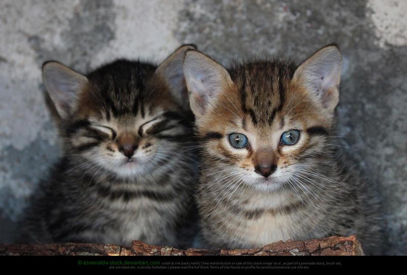 Kittens by Esmeralda-stock