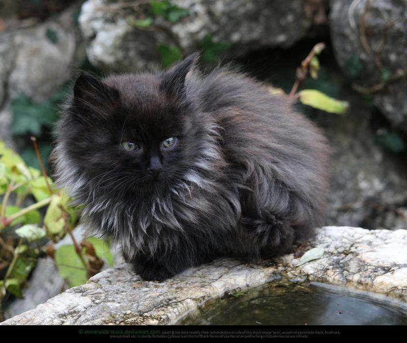 Fluffy Kitten by Esmeralda-stock