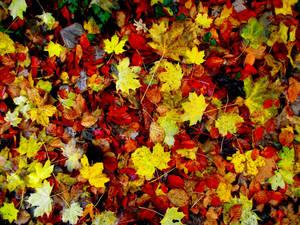 Autumn by D1scipl31974