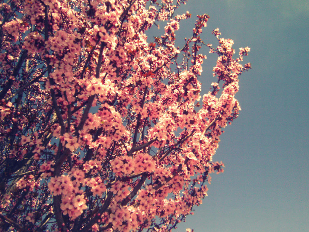 Pink tree flowers by pidon animal on deviantart pink tree flowers by pidon animal mightylinksfo
