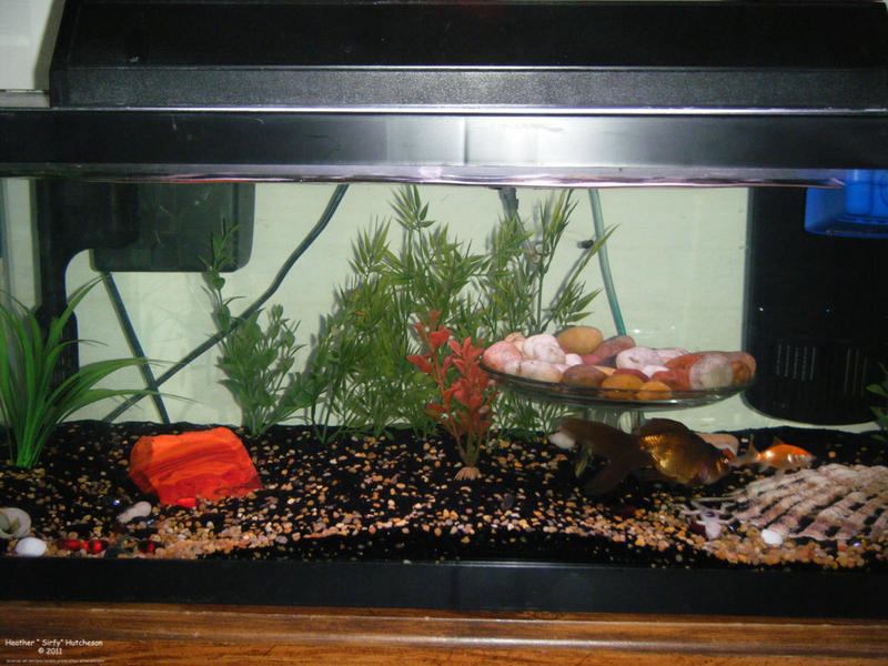 Goldfish tank setup ideas Setting up fish pond