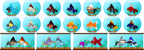 Icon Pet: Goldfish -  Batch 1
