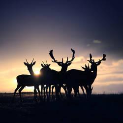 Deer at Sunset by slatkatajna