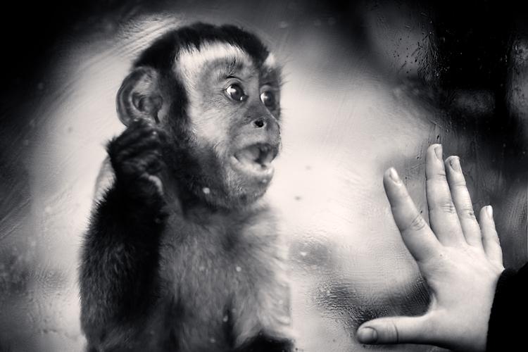 let me out! by slatkatajna