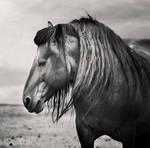 Dark Horse by slatkatajna