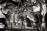 Antlers by slatkatajna