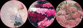 Roses Divider by StarryWave