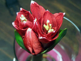 The Bloom Of A Giant Amaryllis
