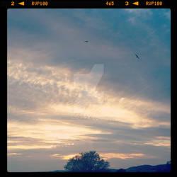 Birds fly away