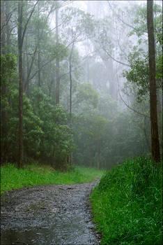 rainy days color