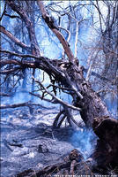 back burn II by tarsh