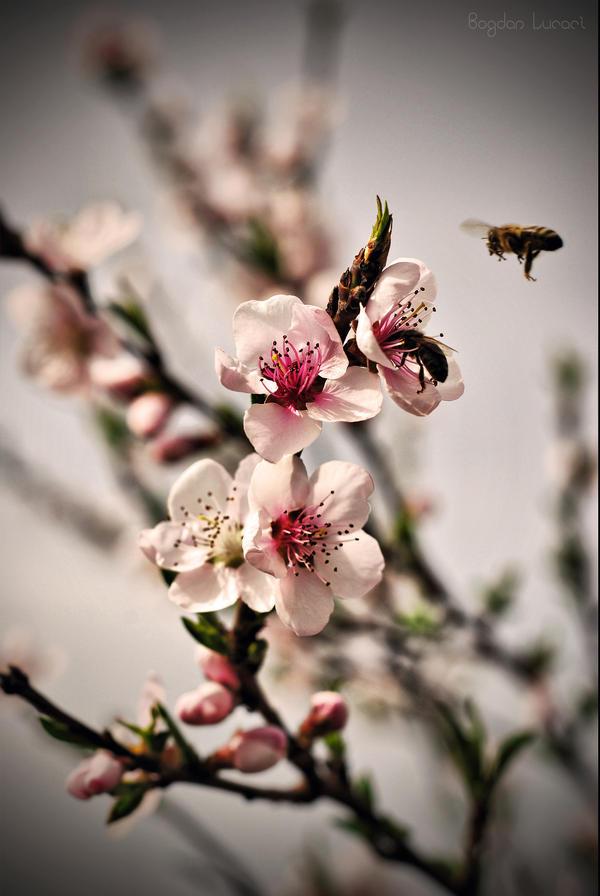 Finally Spring by me-inside515