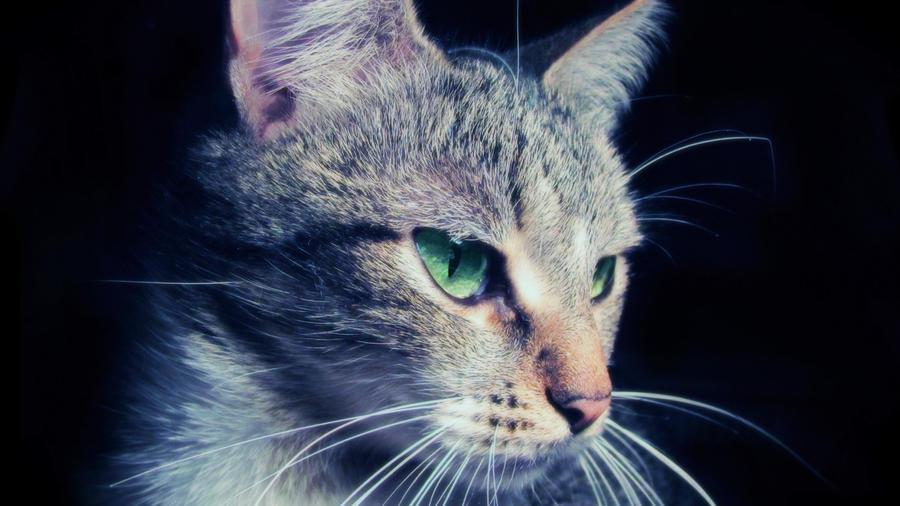 Cat (Romantic+Soft Light effect) by Usagichan-odango