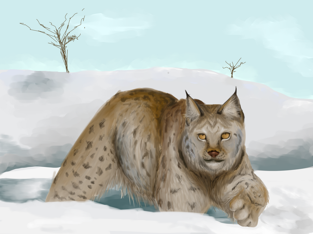 Lynx by SecretlySkilled