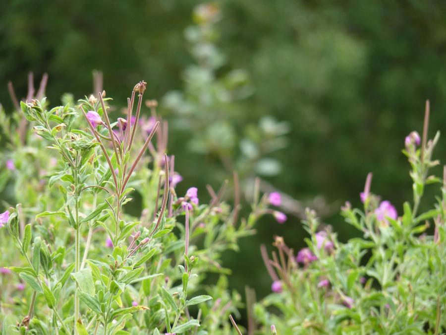 Flowers in Bibury by inkwraith