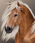 Haflinger Portrait