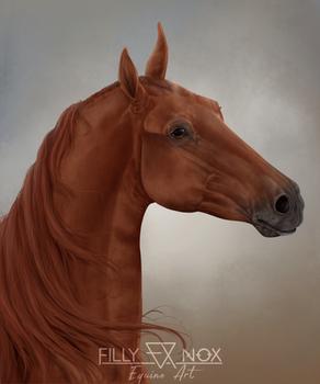 Saddlebred Portrait