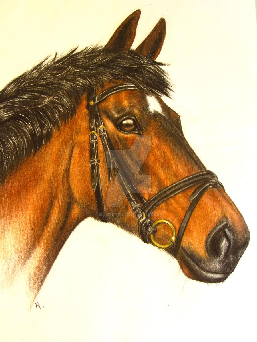 Horse Portrait by bleistiftkind