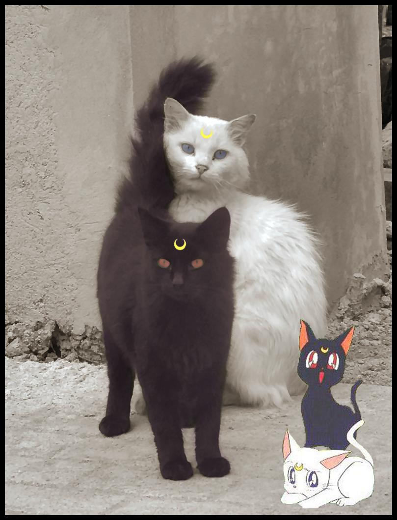 Sailor Moon im Alltag - Seite 2 Luna_and_Artemis_by_Yumpop82