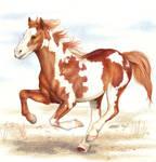 .: Spirit of the Desert :.