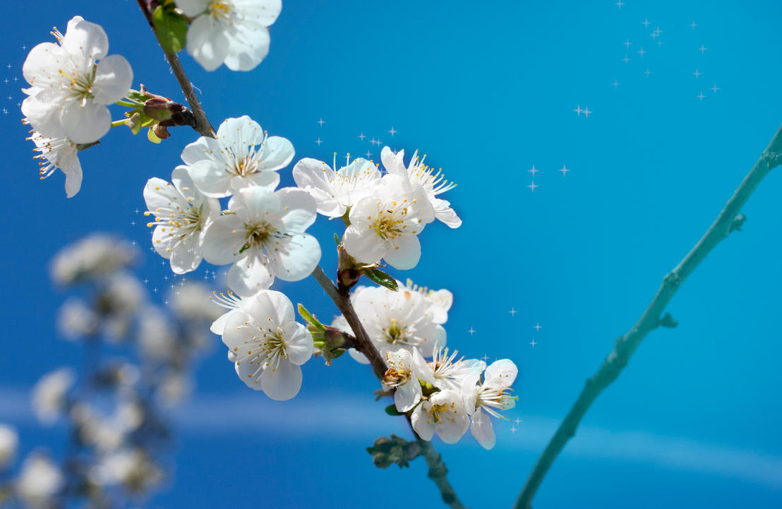 Springtime by NelPhotography