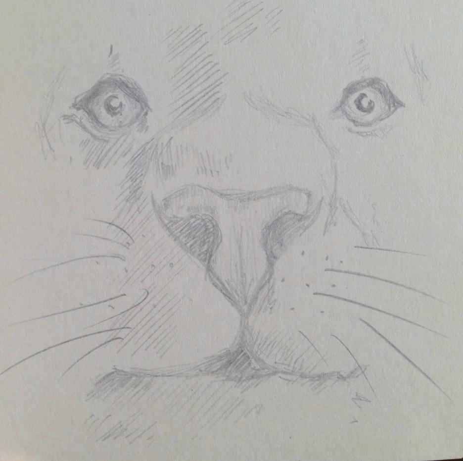 Lion by liliannea