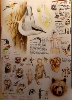A page dominated by a nuthatch