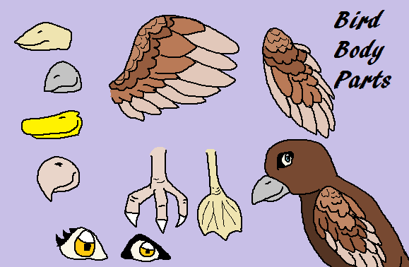 Bird Body Parts : Bird body parts help by hawkstorm st on deviantart