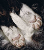 pink jellybean toes
