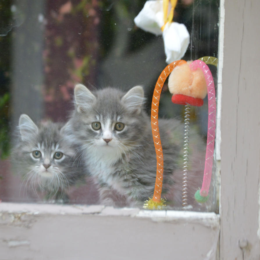 How much is that kitty in the window? by essencestudios