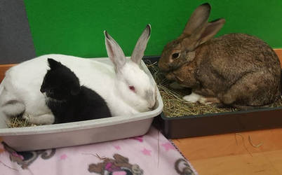 Thumper, Sooty and Charlie