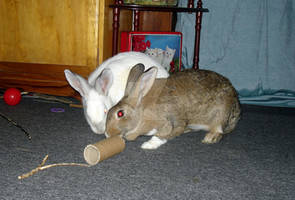 Sooty and Thumper