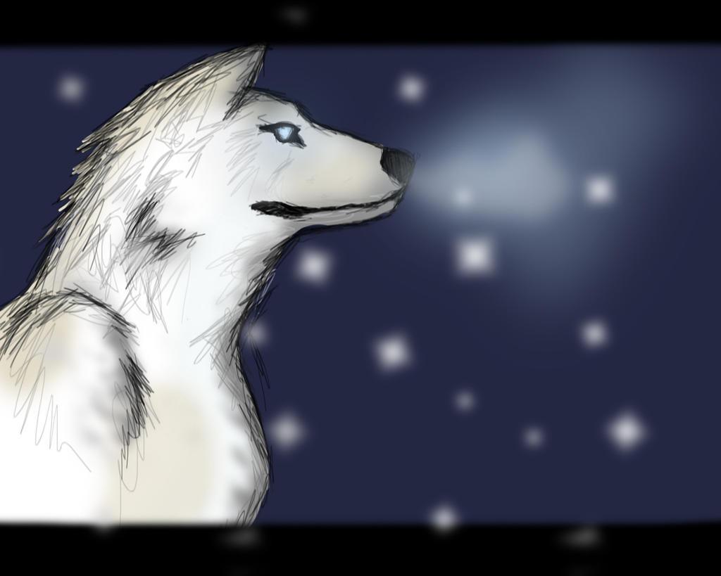 Wolf by alekksandar