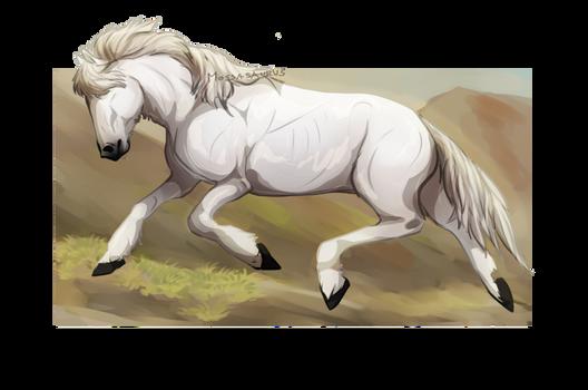 Ponyhorse