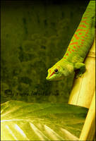 Hues of green by Tienna