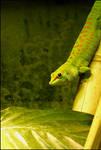 Hues of green