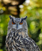 Bokeh Owl by Tienna