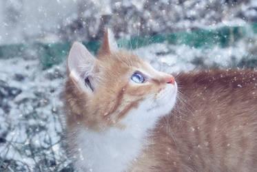 snow by Negish