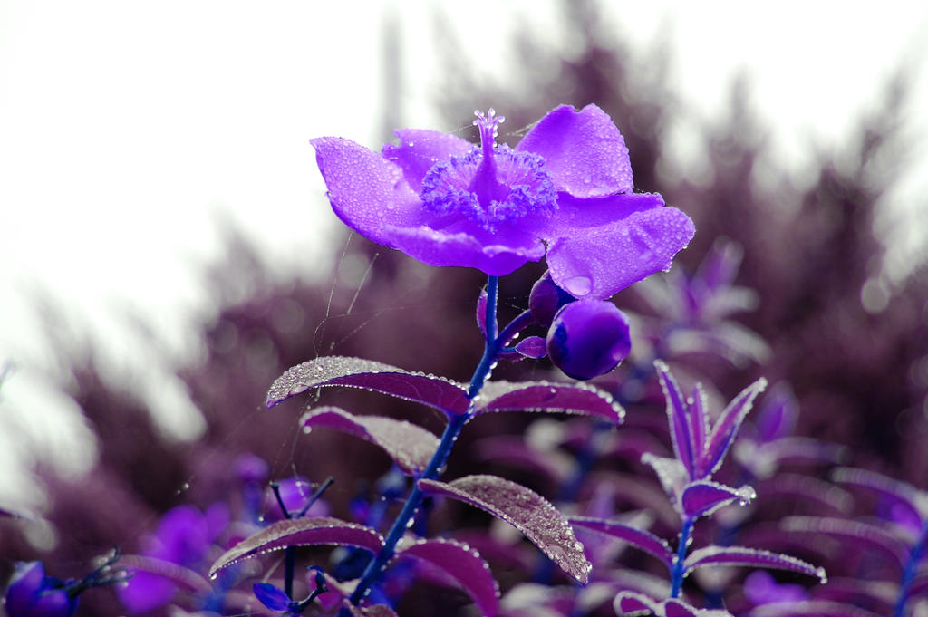 Untitled.20870 - 1.9 'purple haze' by lifeforceinsoul