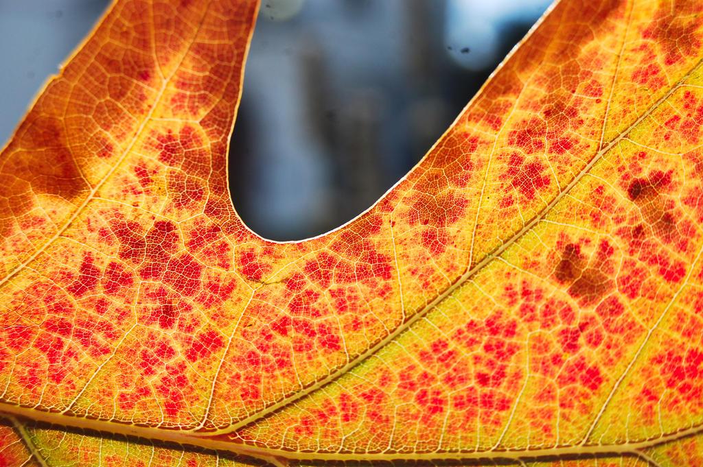 Leaf0928-5. by lifeforceinsoul