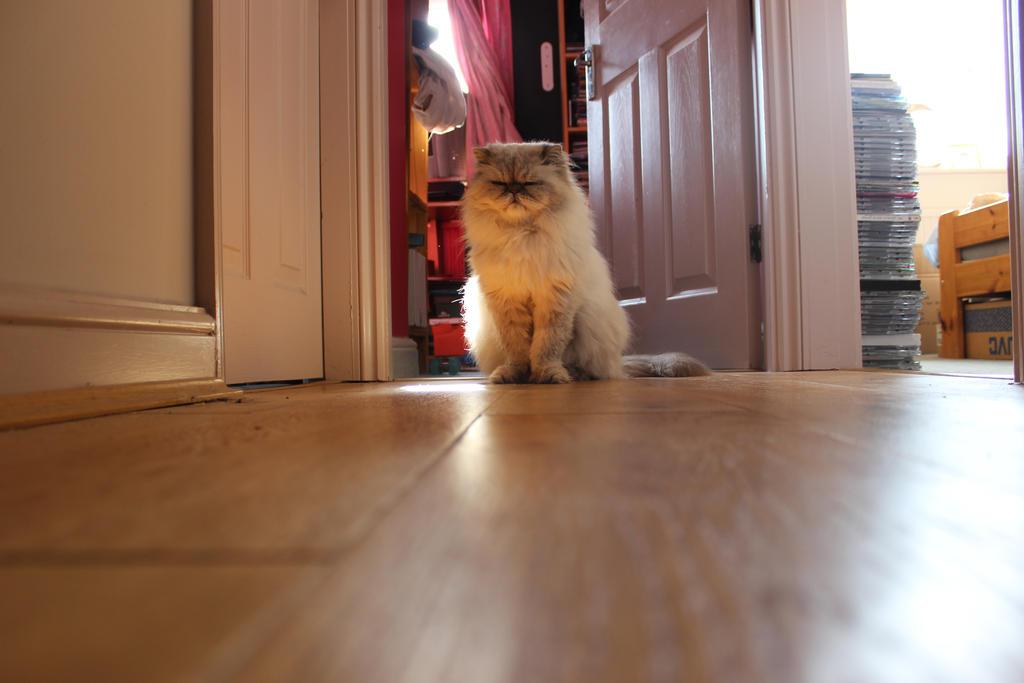 Hallway cat. by lifeforceinsoul
