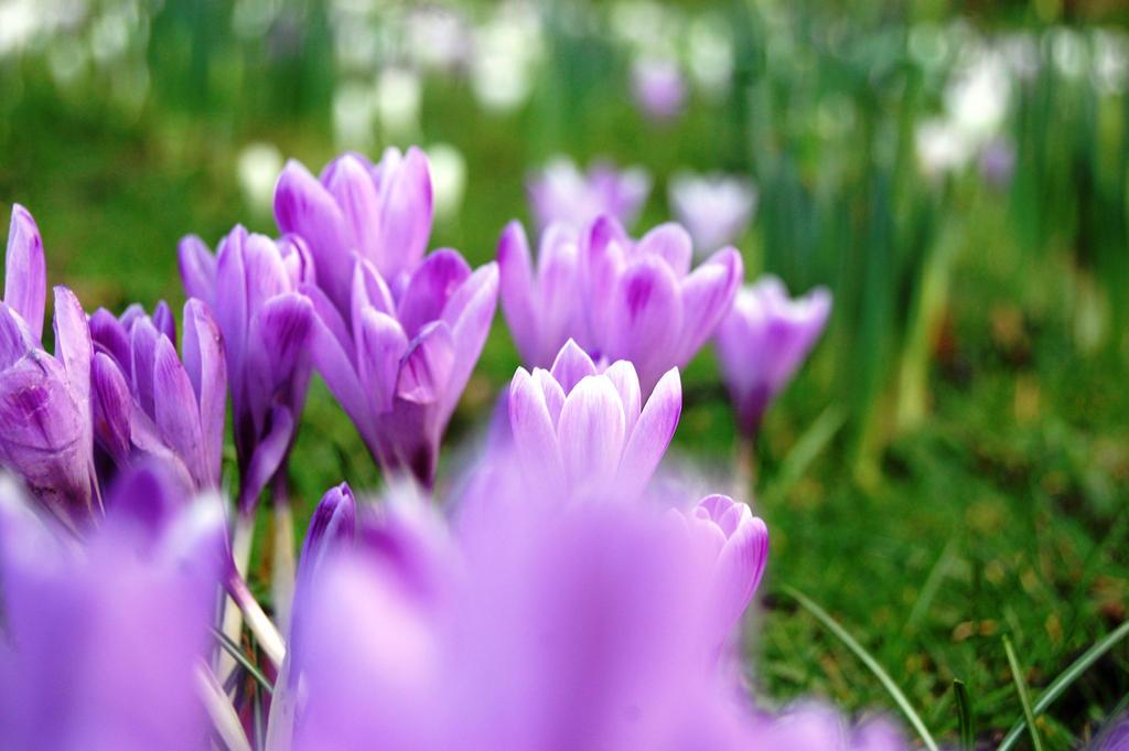 Purple power by lifeforceinsoul