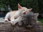 Sleepy cat VII