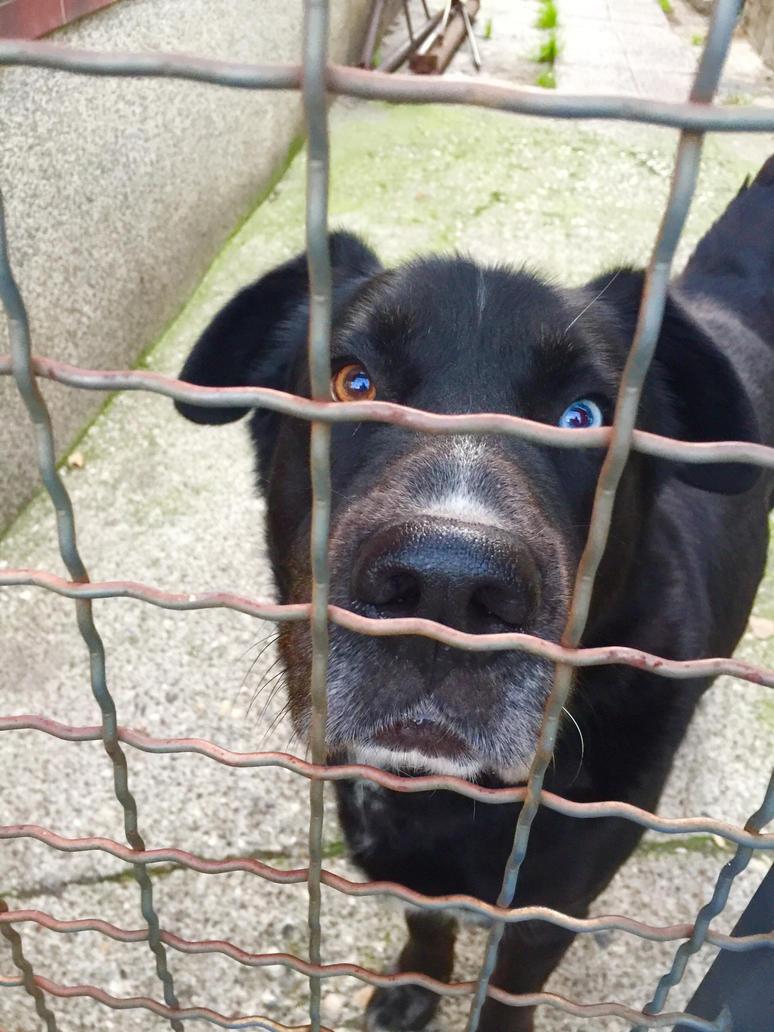 Black dog by snupi2001