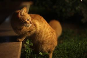 cats and  lights by akiraxpf